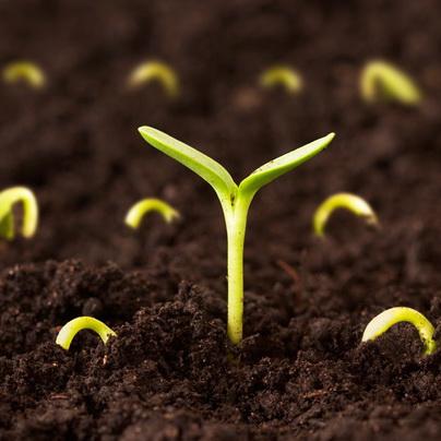 گزارش كارآموزي رشته مهندسی کشاورزی در موسسه تحقيقات اصلاح و تهيه نهال بذر كرج