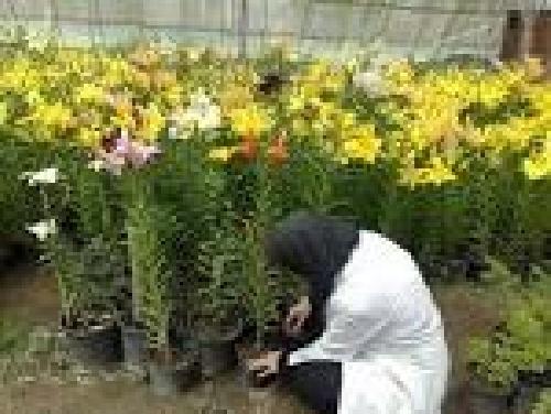 پروژه کارآموزی رشته مهندسی کشاورزی در مركز آموزش گل و گياه واقع در پارك سيمرغ