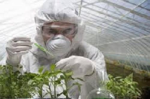 نمونه فایل گزارش کارآموزی مهندسی کشاورزی مدیریت جهادکشاورزی شهرستان گنبد ( واحد حفظ نباتات )