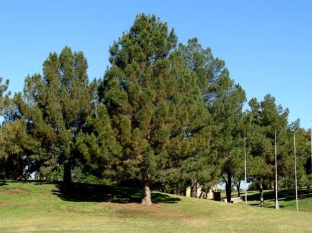 گزارش کاراموزی منابع طبیعی