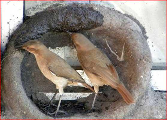 نمونه طرح جابربن حیان علوم لانه ساختن یک پرنده