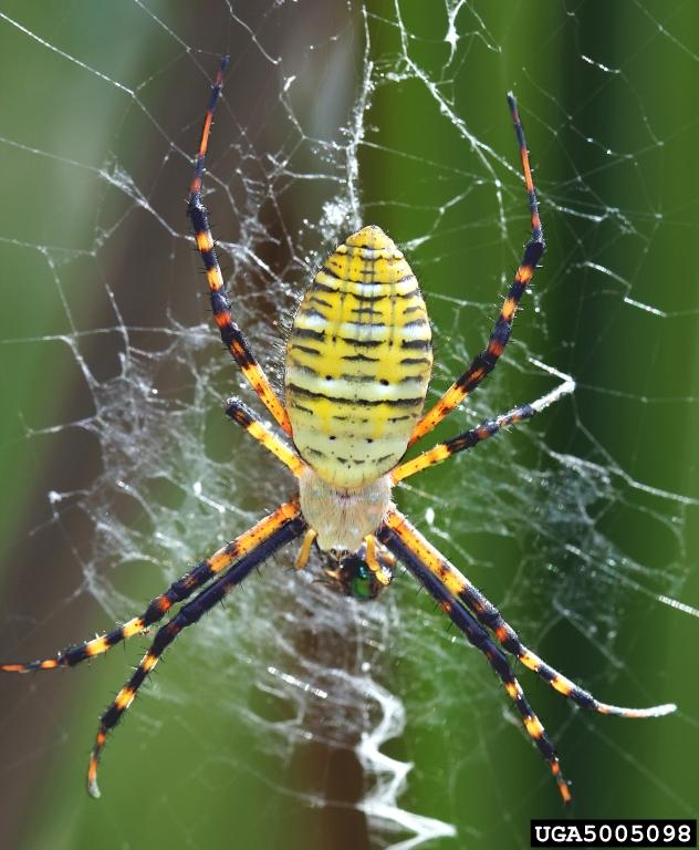 طرح جابر با موضوع تار عنکبوت