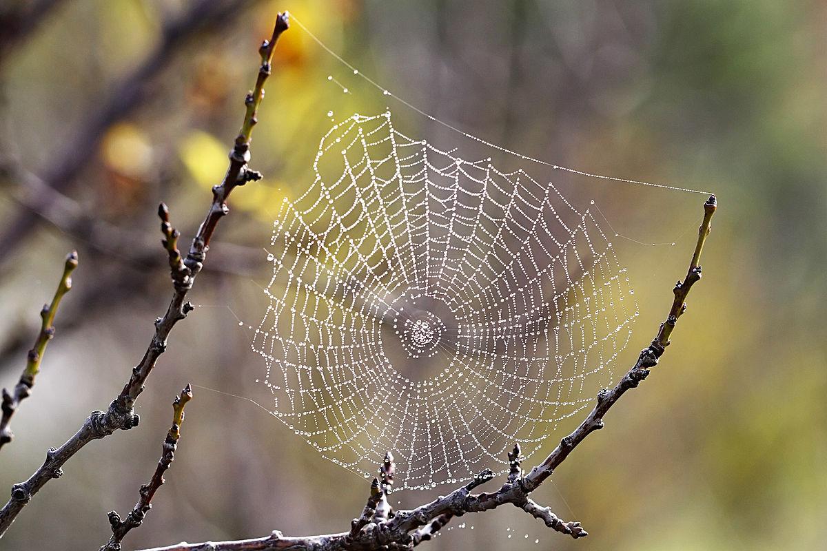 نمونه طرح جابر بن حیان درس علوم یک تار عنکبوت چقد وزن تحمل میکند؟