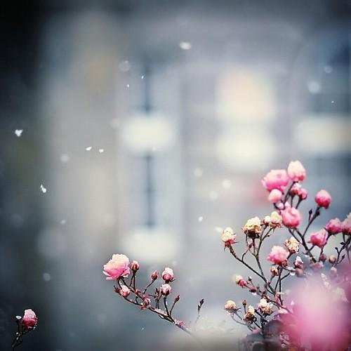 نمونه طرح جابربن حیان دانه های برف